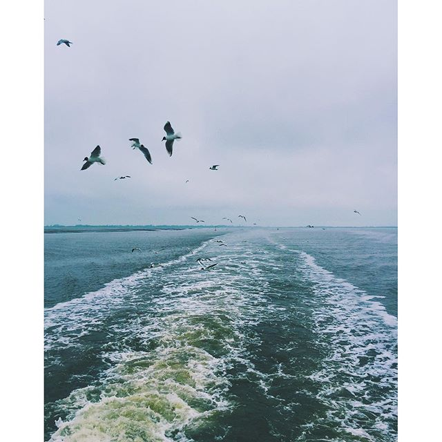 Boattrip and seagulls. #northsea #nordfriesland